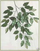 Twelve Green Artificial Silk Ficus Branch Leaves