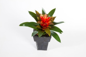 """Plastic bromeliad on a Spike with a red bloom, 12"""" / 30 cm - Artificial Plant - Decoration Plant - artplants"""