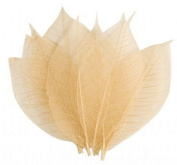 Colorstories Rubber Tree Skeleton Leaves (Set of 10) Colour