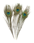 100 Piece High Quality Real Natural Peacock Feathers, 25cm - 30cm