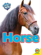 Horse (Caring for My Pet)