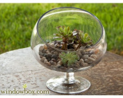 Medium Glass Slanted Bias Terrarium Bowl