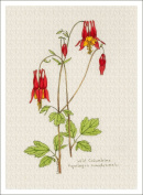 Botanical Illustration of Wild Columbine from the Wildflowers Group, High Quality Giclee Print, 18cm X 24cm