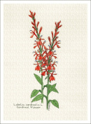 Botanical Illustration of Cardinal Flower from the Wildflowers Group, High Quality Giclee Print, 18cm X 24cm