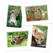 Blank Notecard Set - Babes in the Woods - Box of 12