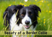 Beauty of a Border Collie 2016