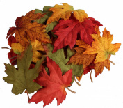 Assorted Fall Colour Maple Leaves 13cm - Autumn Weddings,fall Decor - Life Size