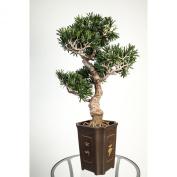 Artificial Bonsai Podocarpus in pot, 320 leaves, 0.9m / 90 cm, outdoor - Artificial tree / Fake bonsai - artplants