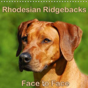 Rhodesian Ridgebacks Face to Face 2016