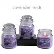 Hosley Set of 3 Lavender Fields Highly Scented, 80ml Wax, Jar Candle