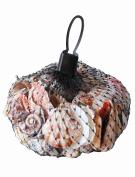 Assorted Tropical Seashells Beach Ocean Souvenir Authentic in Black Net 275g