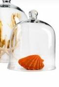 30cm Glass Cloche
