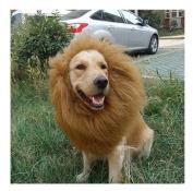 Lion's Mane Dog Costume