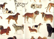 Tassotti Dogs of the World Decorative Rolled Gift Wrap Paper 2 Full Sheets