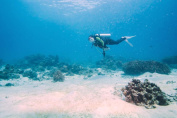 Full-Day Scuba Diving in Tenerife - Tinggly Voucher / Gift Card in a Gift Box