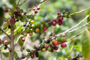 Hawaii Coffee Plantation and Bee Farm Experience for Two - Tinggly Voucher / Gift Card in a Gift Box