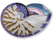 Zarah 21-21-Z2 Nautilus Shell Silver Plate Pin