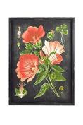 Vagabond Vintage, Rustic Rectangular Wood Framed Vintage Botanical Print with Glass Front - Flower 1