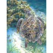 Royal Brush Colour Pencil by Number Kit, 22cm by 30cm , Sea Turtle