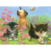 Colour Pencil By Number Kit 22cm x 30cm -Kittens