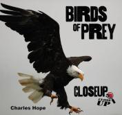 Birds of Prey: Closeup