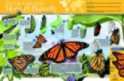 Neo Sci 35 W x 23 H in. Monarch Butterfly Life Cycle Laminated Poster Grade 6-12