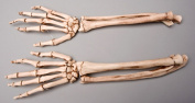 Skeletons and More SM372DA Aged Forearms Left and Right