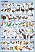 Olympia Sports 16332 24 x 36 Full Colour Birds Poster