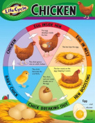 TREND ENTERPRISES INC. T-38153 CHART LIFE CYCLE OF A CHICKEN