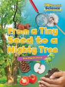 Fundamental Science Key Stage 1: From a Tiny Seed to a Mighty Tree