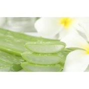 Aloe & Vera - 2696 - Candle & Soap Fragrance Oil - 4 Oz (120 ml) - High Performance Supplie - Special Promotion.