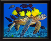 Sea Turtle with Tropical Fish, Wall Art 8x10 Framed Photo