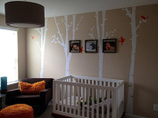 Pop Decors PT-0136-1-Vd Beautiful Wall Decal, Birch Trees