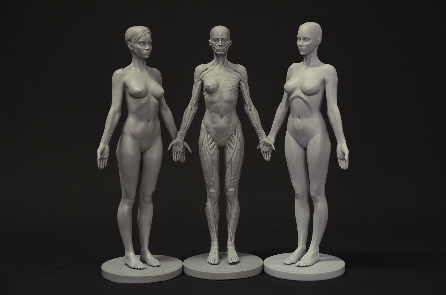 Female Anatomy Figure Collection Planar Ecorche And Skin