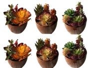 Set of 6-Nearly Natural mixed 15cm Ceramic Potted Artificial Faux Succulent Plants
