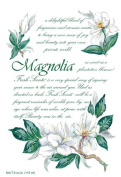 Willowbrook Fresh Scents Scented Sachet Set of 6 - Magnolia