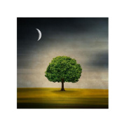 Philippe Sainte-Laudy 'Under the Moon' Canvas Art