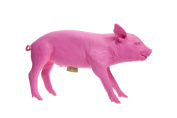 Areaware Bank in The Form of a Pig, Florescent Pink
