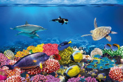 Undersea coral reef photo wall paper - aquarium fish sea mural - XXL undersea underwater world wall decoration 82.7 Inch x 55 Inch
