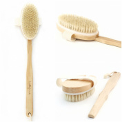 Premium Body Scrubbing Brush 2-in-1 - Long-Handled Exfoliating Body Brush - Convenient Detachable Handle - Fantastic Massager - Ideal for Skin & Cellulite Exfoliation - All Natural Boar Bristles