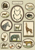 Cavallini & Co. Natural History Animals Decorative Paper Sheet 50cm x 70cm