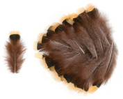 Lady Amherst Pheasant Lower Back Feathers (20 Pieces), Yellow and Iridescent Dark Green