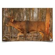 Eze-Scorer Whitetail Deer Target