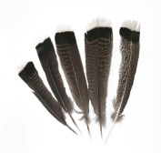 Hgshow Imitation Eagle Feathers, 10 Pieces Turkey Pointers 'Imitation Eagle' Wing Large Plume