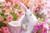 Beautiful Bunny - Art Print Poster,Wall Decor,Home Decor