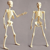 human skeleton model toys: buy online from fishpond.au, Skeleton