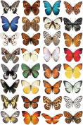 32 Beautiful Photorealistic Colourful Butterfly Static Cling Window Stickers - Home Decorations by Stickers4
