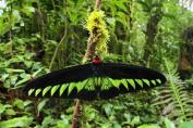 3D-Postcard/Lenticular-Card Tropical Butterflies