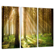 Set of 3 Green Canvas Art Wall Pictures Trees Landscape Print 3042