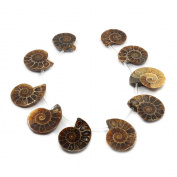 Justinstones 10pcs Side Drilled Natural Ammonite Fossil Loose Gemstone Beads